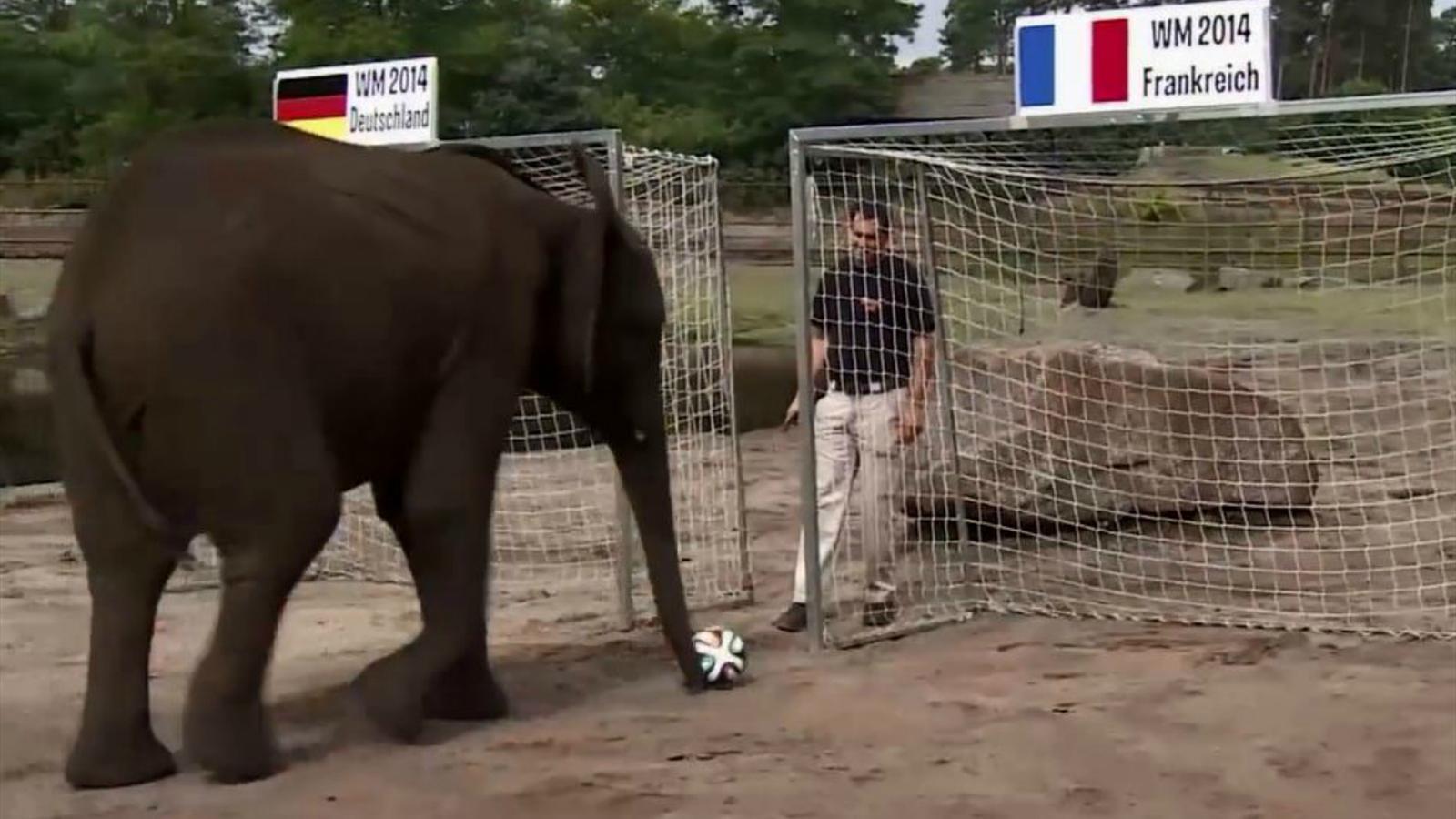 футболу слонихи все от прогнозы нелли по