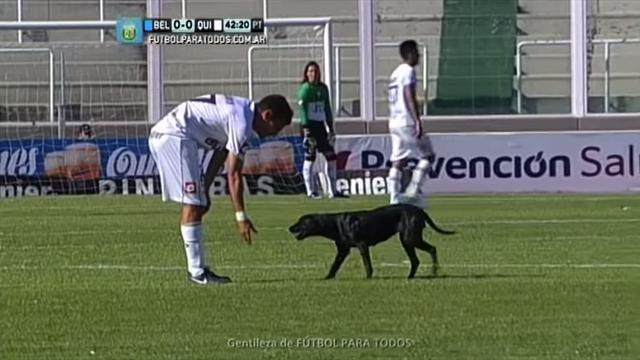 un chien s 39 incruste lors d 39 un match en argentine