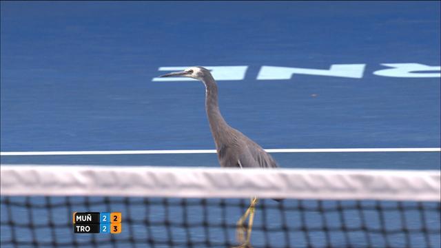 Un drôle d'oiseau s'invite sur le court 2 pendant un changement de côté