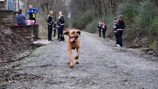 Собака, которую выпустили пописать, случайно финишировала седьмой на полумарафоне