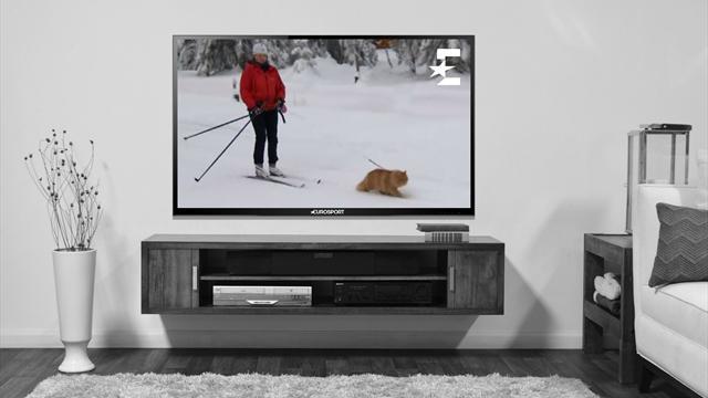 Норвежский кот-лыжник собрал 10 тысяч фолловеров в фейсбуке