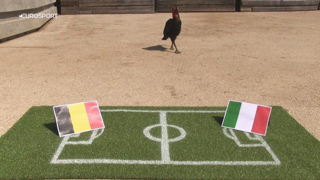 Nelson le calao avait vu juste avec la victoire de l'Italie