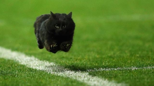 Черный кот выбежал на поле в регбийном матче и прорвался в очковую зону