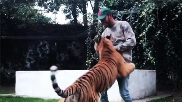 Еще одно видео, на котором Хэмилтон резвится с киской