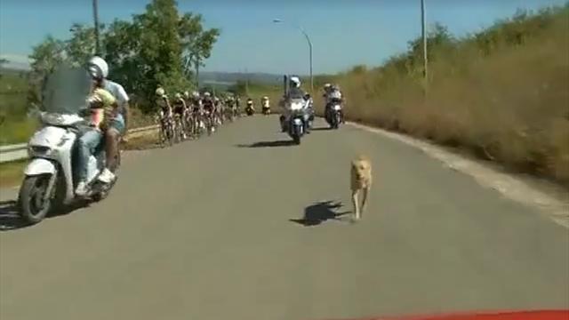 Peloton ve köpeğin kıyasıya yarışı