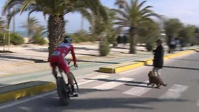 Dog walker forces Sagan to swerve off the road