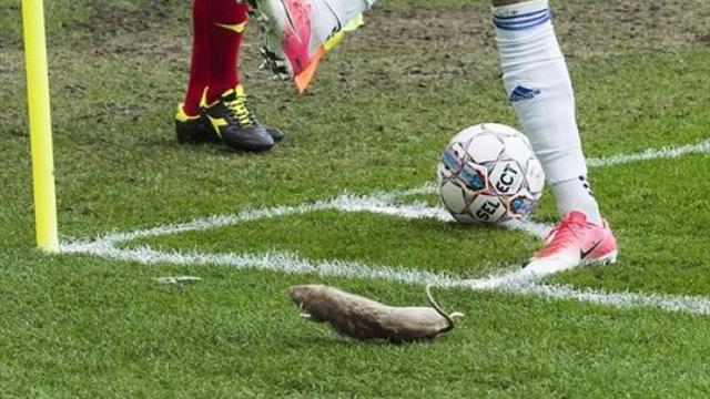 Фанаты «Брондбю» бросили дохлых крыс в игроков «Копенгагена»