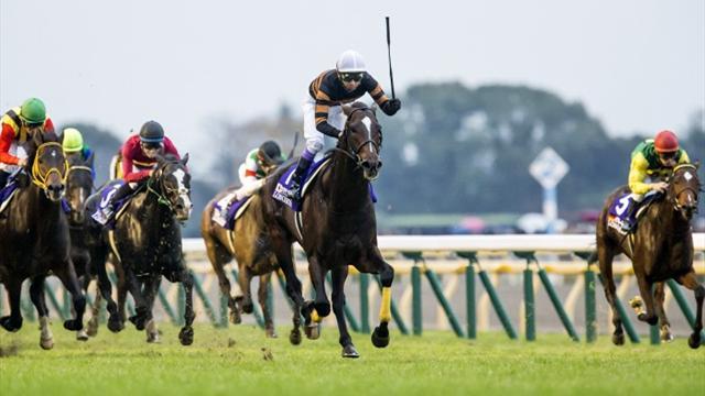 JAP : Kitasan Black, déchaîné à l'idée de Chantilly !