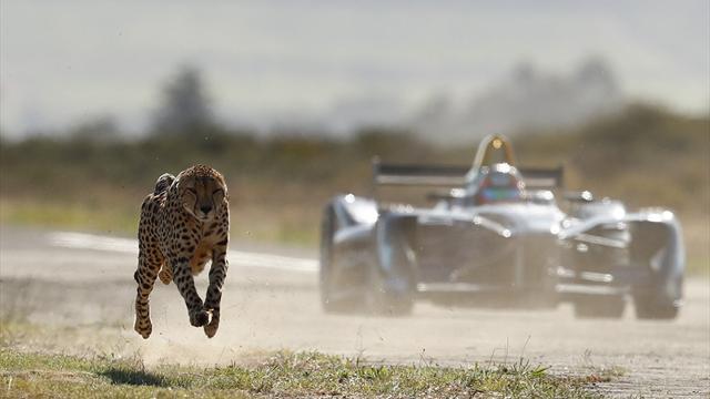 Fórmula E car vs Guepardo
