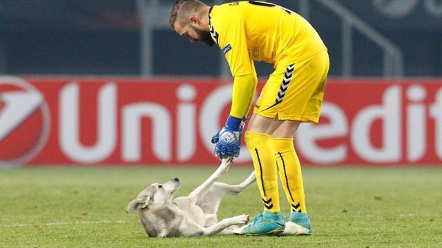 Лучший момент матча «Вардар» – «Русенборг», который организовали кипер македонцев и милейший пес
