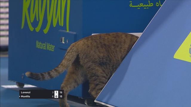 Quand un chat s'invite sur le court pendant Monfils-Lorenzi…