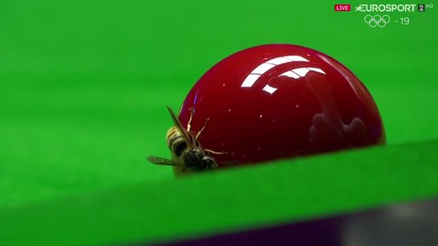 Árbitro de Snooker mata una avispa en la mesa