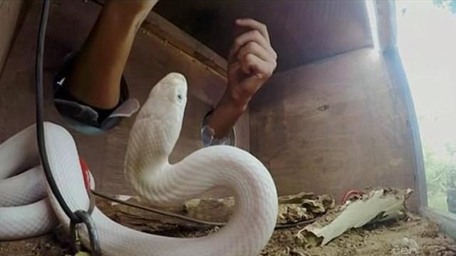 Томич засунул руки в коробку со змеей. Она его, конечно же, укусила