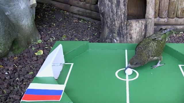 WM-Orakel Newton tippt Überraschung im Eröffnungsspiel