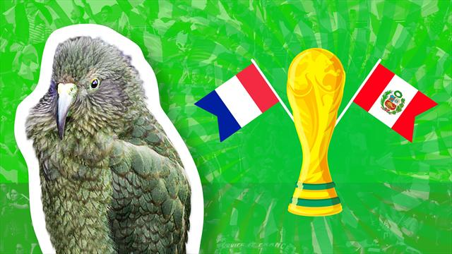 Newton the psychic parrot predicts France-Peru result