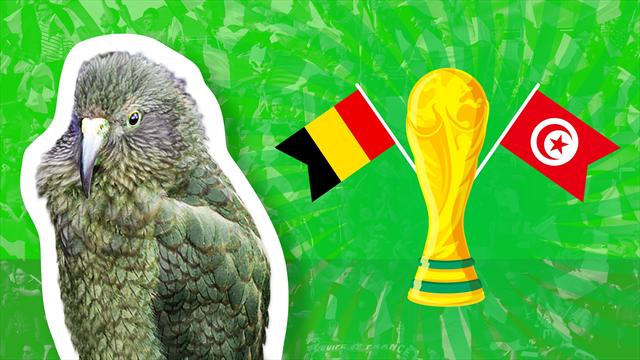 Newton the psychic parrot predicts Belgium-Tunisia result