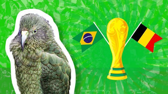 Brasile-Belgio: chi vince? Il pronostico del nostro pappagallo Newton