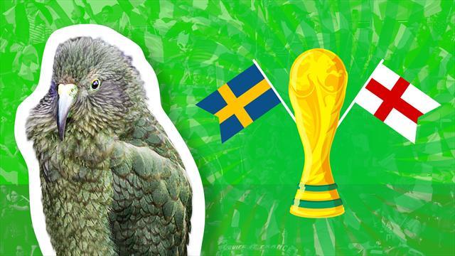 Svezia-Inghilterra: chi vince? Il pronostico del nostro pappagallo Newton