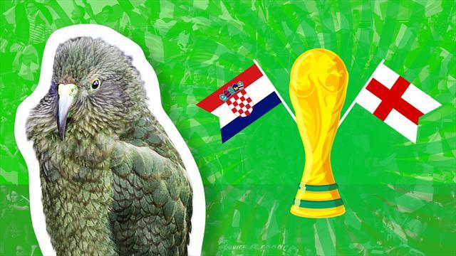 Croazia-Inghilterra, chi va in finale? Il pronostico del nostro pappagallo Newton