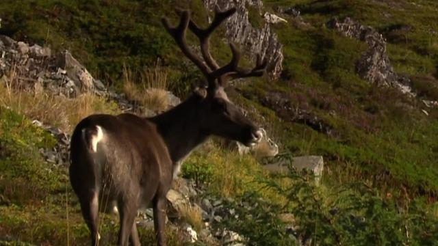 WATCH: Reindeer runs along the road at Arctic Race of Norway