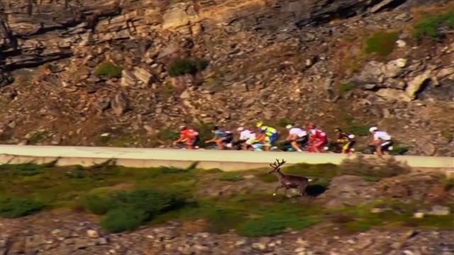 Tierischer Besuch: Rentier sprintet bei Arctic Race of Norway mit Fahrern mit