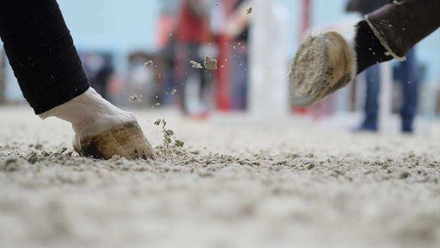 Nach Chaos beim Distanzreiten: Pferd bei Reit-WM eingeschläfert