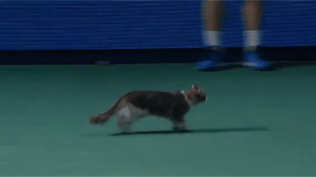 Котик выбежал на корт и взбудоражил зрителей по ходу матча Стивенс – Жабер