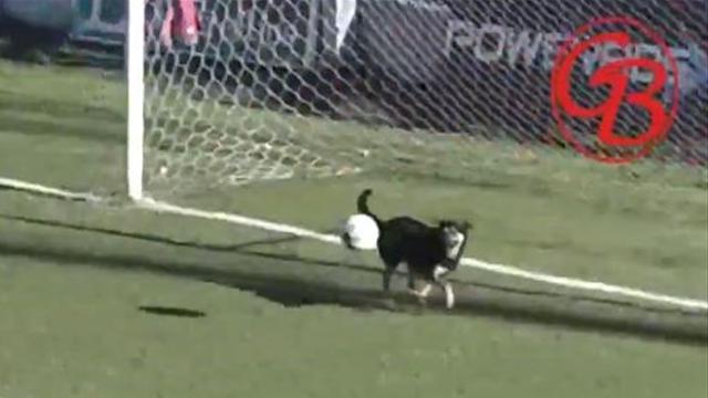 Stray Given? Goalkeeping dog saves effort - puns ensue