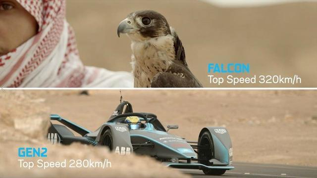 Quand Massa sprinte contre un faucon pèlerin