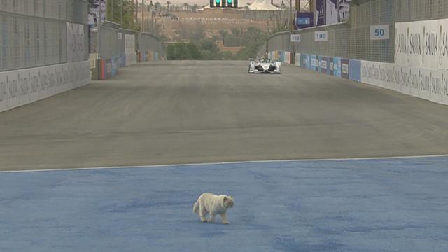 Невозмутимый котейка прогулялся по трассе во время заезда «Формулы-Е»