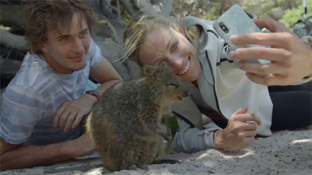 Kerber and Zverev have fun with quokkas