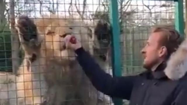 Кейн бесстрашно покормил льва куском мяса – через решетку, разумеется