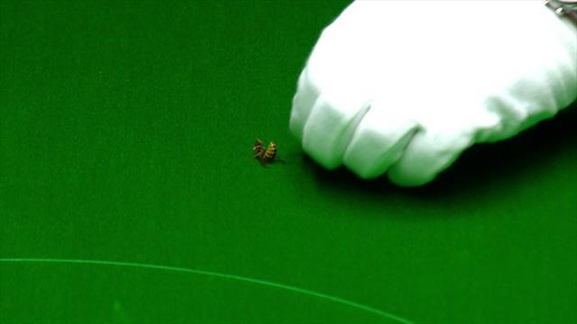 Una vespa disturba Ronnie O'Sullivan durante la finale del Masters, ma fa una brutta fine...