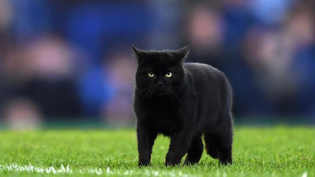 Un chat noir interrompt une rencontre de Premier League