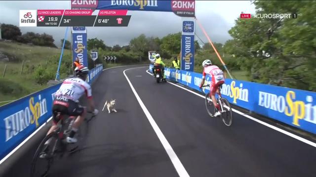 Giro de Italia 2019: Un perro provoca el gran susto del día al cruzarse con los escapados