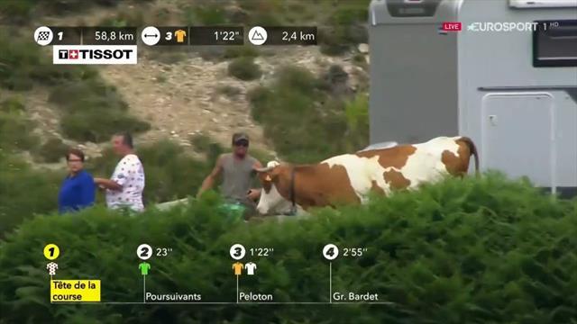 Tour de Francia 2019: ¡La que se pudo haber liado! Una vaca casi se cuela en plena carrera