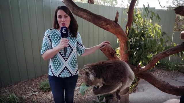 Australien brennt: Eurosport zu Besuch im Koala-Sanctuary